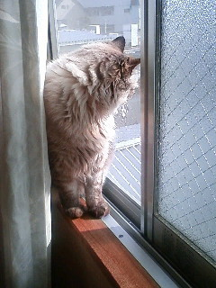 090119_寝室の窓から.JPG